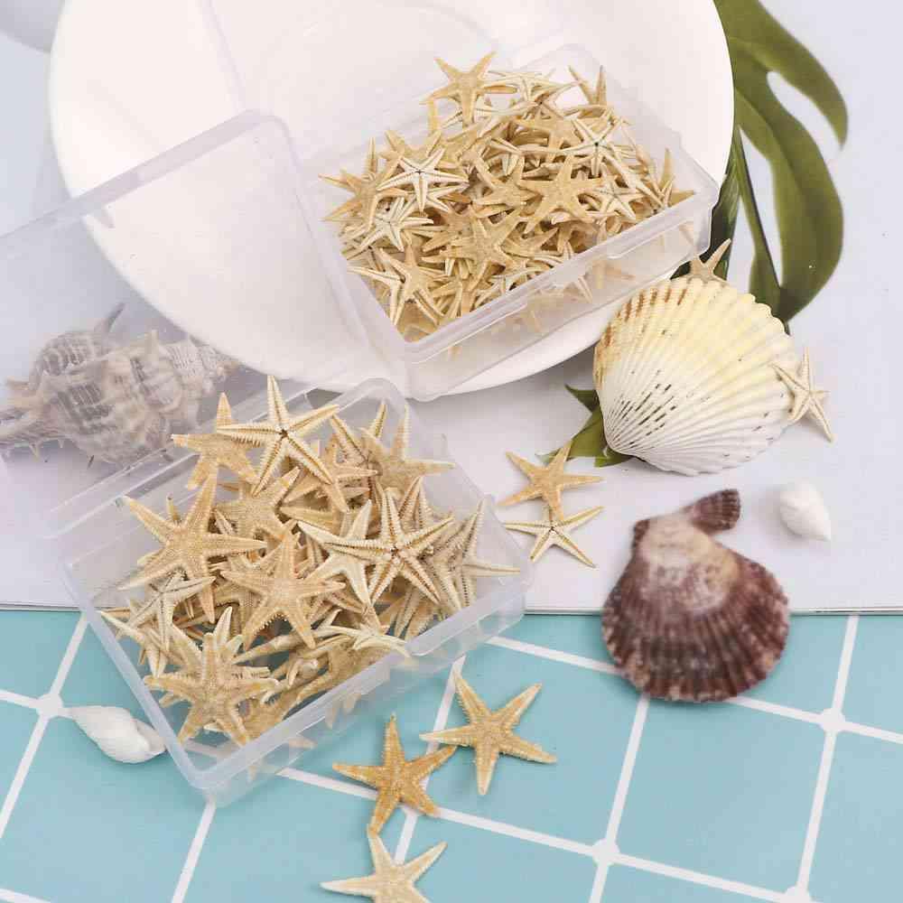 Natural Beach Craft Starfish Seashell - Natural Sea Stars Diy Beach Wedding Decoration Crafts