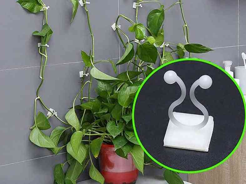 Invisible Wall Vines Fixture-sticky Hook For Plants