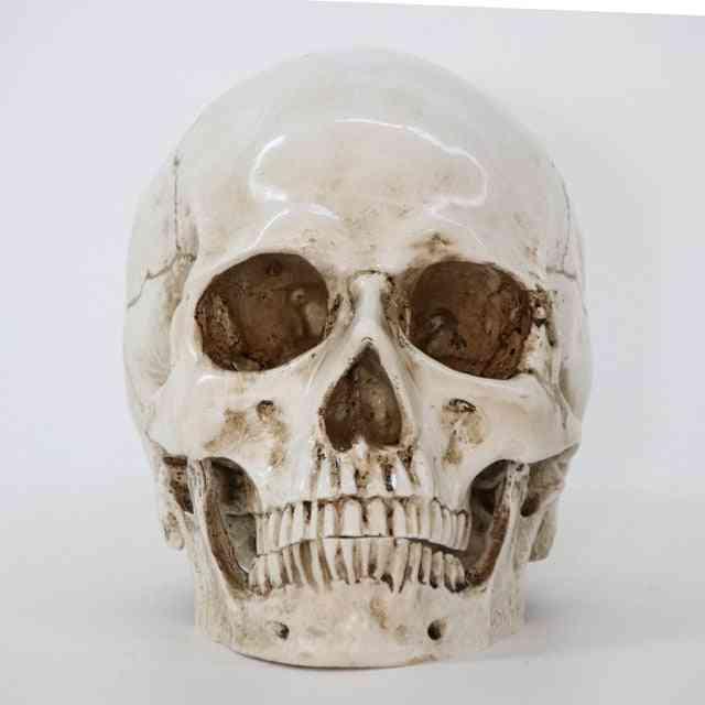 Creative Resin Skull Model Life Replica Sculpture Halloween Home Decor