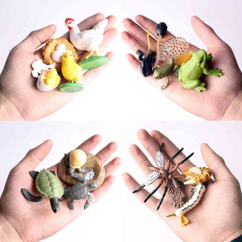 Simulation Terrestrial Marine Forest Poultry Animal Model Toy