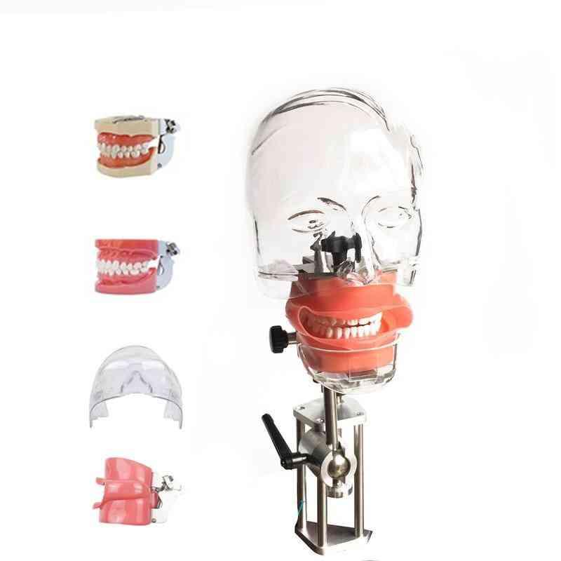 Dental Phantom Head Model With New Style Bench Mount For Dentist Education