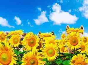 Happy Sunny, 3-d - Birthday Card