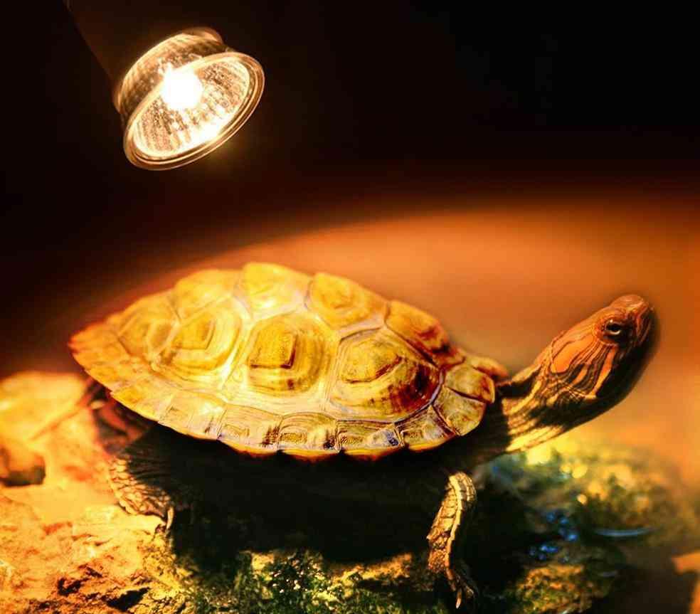 Turtle Heating Lamp, Mini Pet Heat Bulb, Lizards Temperature Controller Uv Light