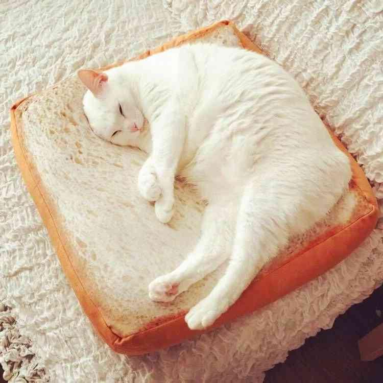Toast Pattern Cat Pad