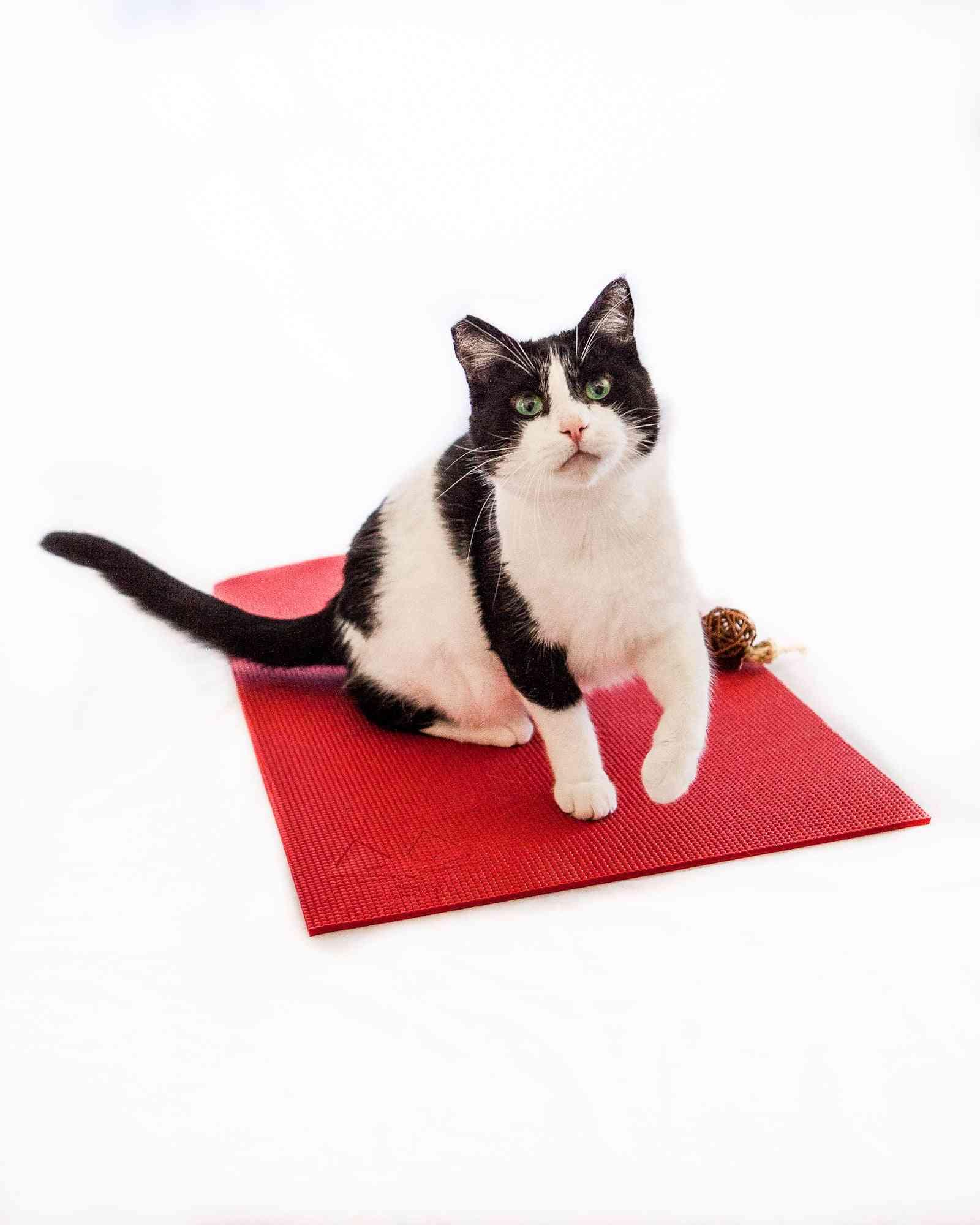 Feline Yogi Cat Mat -red