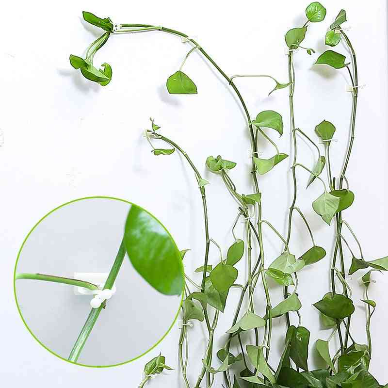 Plant Climbing, Wall Self-adhesive Fastener Tied Fixture, Vine Buckle Hook, Garden Vine Clips, Fixed