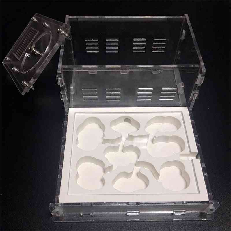 Flat Ecological Plaster Ant Nest