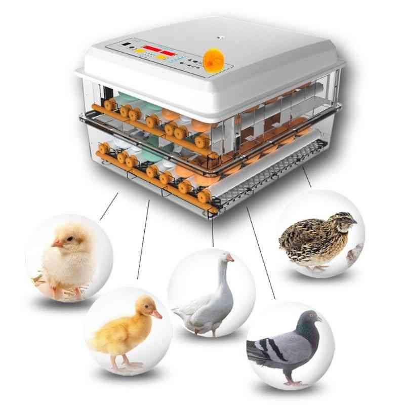 Eggs Incubator Brooder Bird Quail Chick Hatchery Incubator