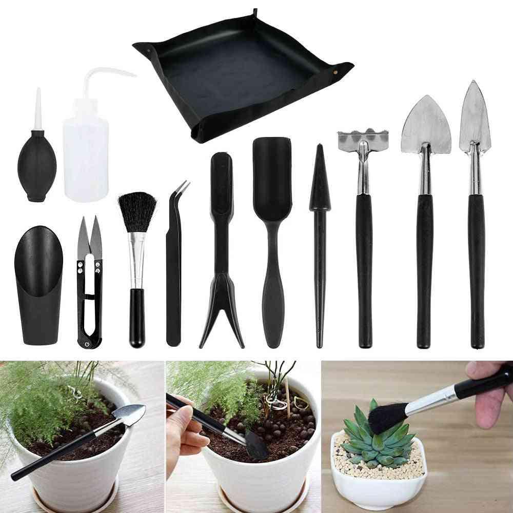 Planter Kit Succulent Plants And Miniature Transplant Seedling Tool