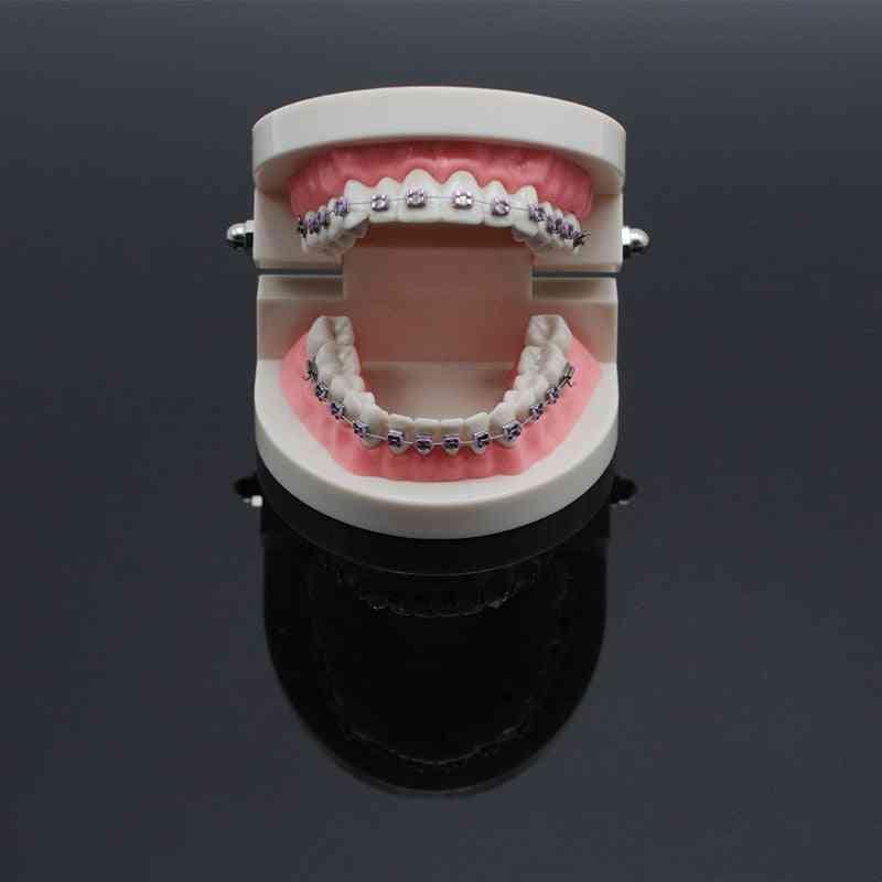 Dentistry Lab Teach Study Standard Typodont Demonstration Teeth Model With Bracket